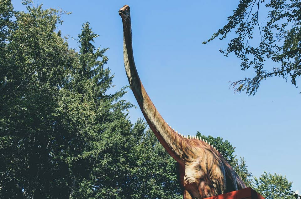 Diplodocus encyclop die des dinosaures - Dinosaure diplodocus ...